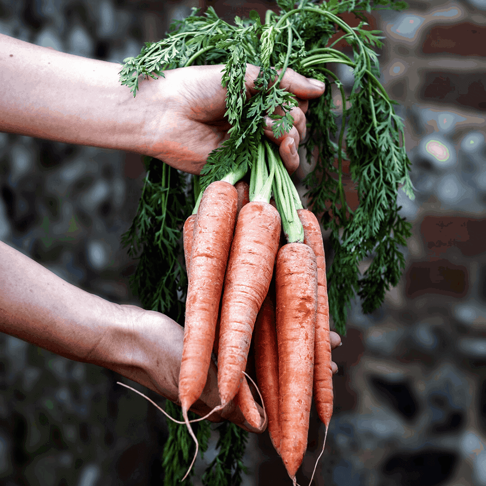 coal baked carrot hummus