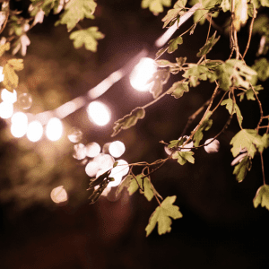Fairy lights in the woods at The Salt Box