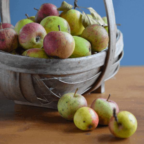 SEASONS EATINGS : AUTUMN SQUASHES, PHEASANT AND THE HUMBLE APPLE