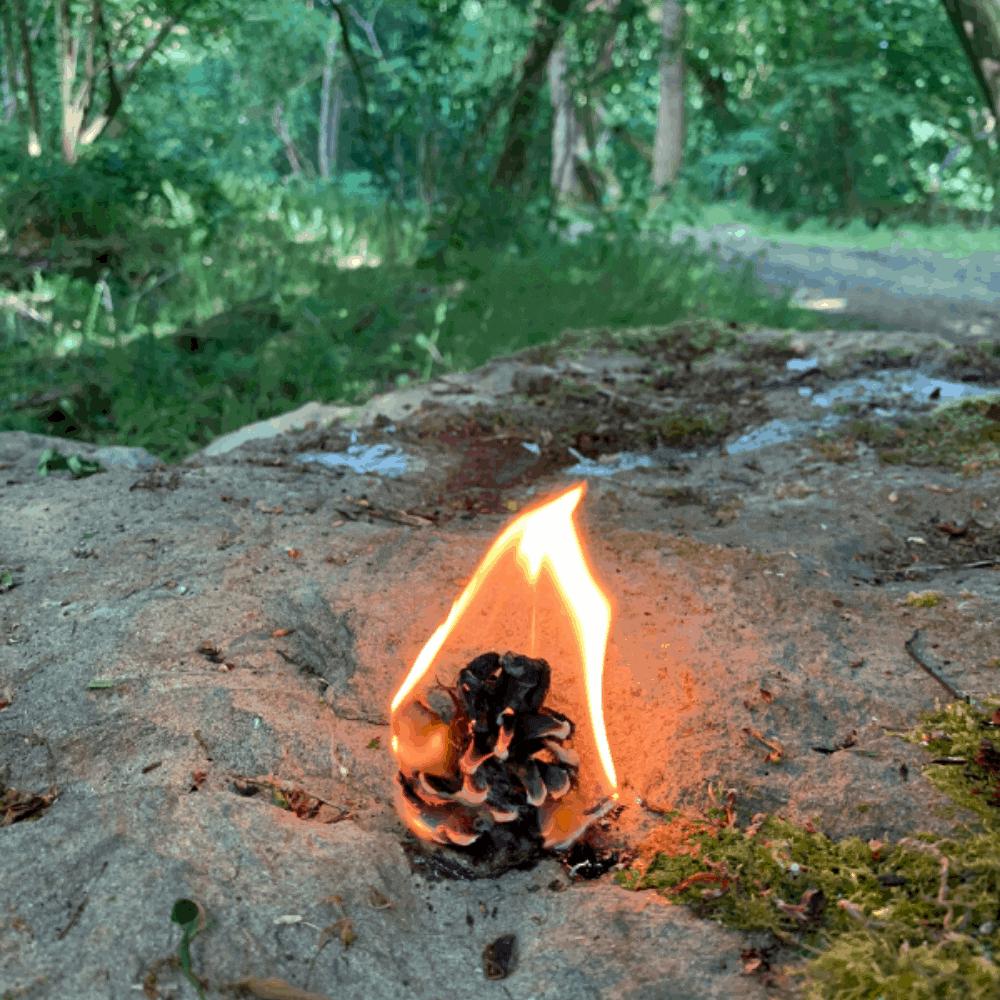 Pine Cone Fire Starter
