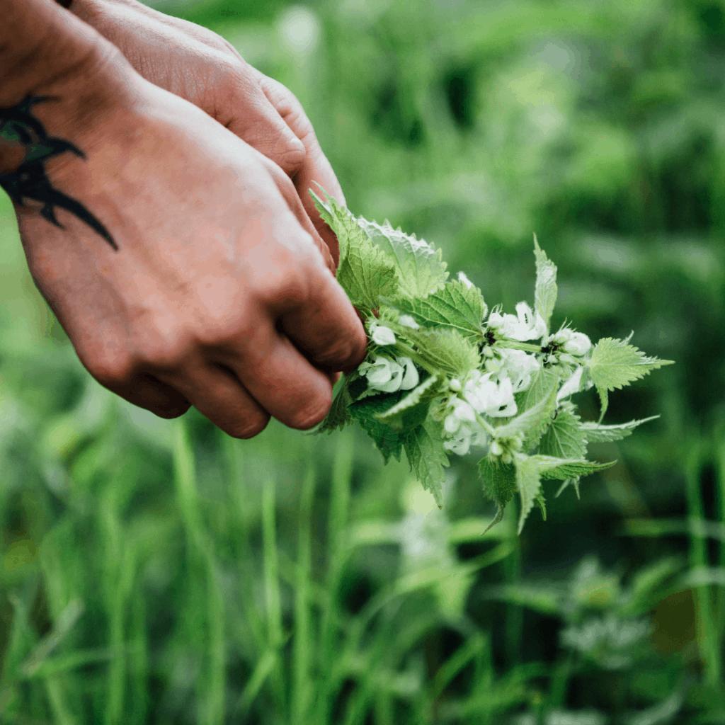 foraging, wild food, foraging walk, the salt box