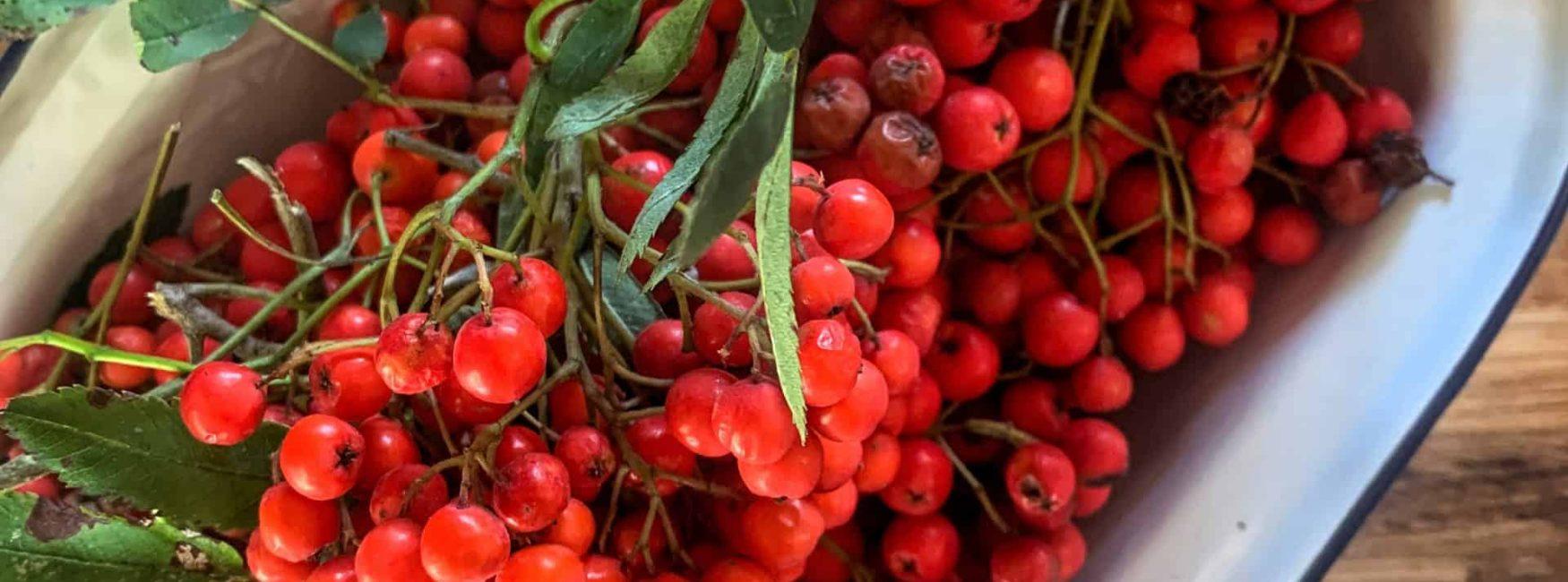 Foraged Rowan Berries